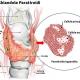 tiroide-marta-simonetto-naturopata-studio-naturopatia-busto-arsizio-mozzate-paratiroidi